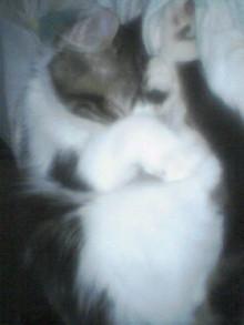 猫の丸くなるポーズ