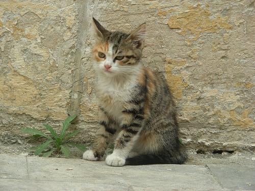cat_marta3