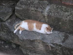cat_roma3