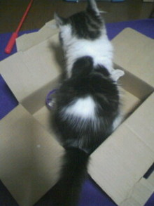 箱好き・・・