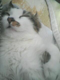 猫の好きな匂いって?