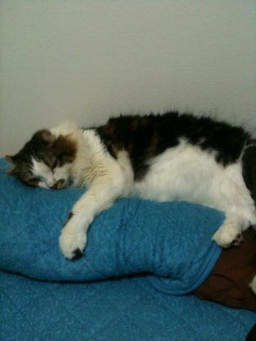 猫ですが。うちのストーカー