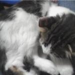 猫も結膜炎になるのだ…