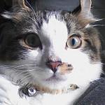 猫に鈴、ちりちりちりーん♪