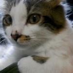 いつから猫は自分の名前を認識するの?