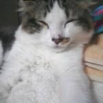 眠り猫のように寝ています・・・。