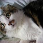 猫をペットホテルに預ける。