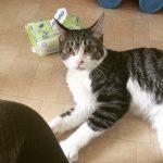 保護猫の一時預かりボランティア。猫の方舟レスキュー隊の活動を少し手伝っています。誰でもできる?